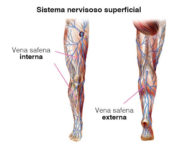 sistema venoso superficial