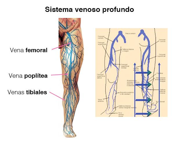 sistema venoso profundo